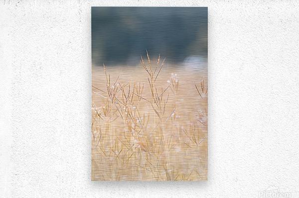 Died grass in field  Metal print