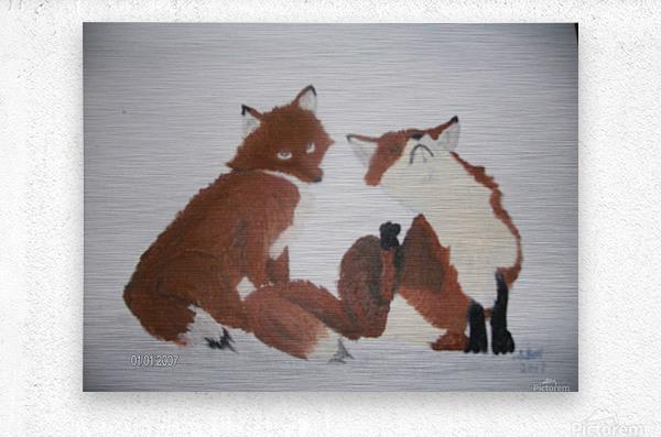 Red Fox pair  Metal print