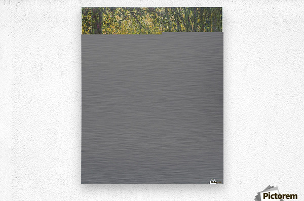 Trimed Trees  Metal print