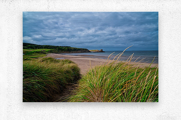 Sand and Grass  Metal print