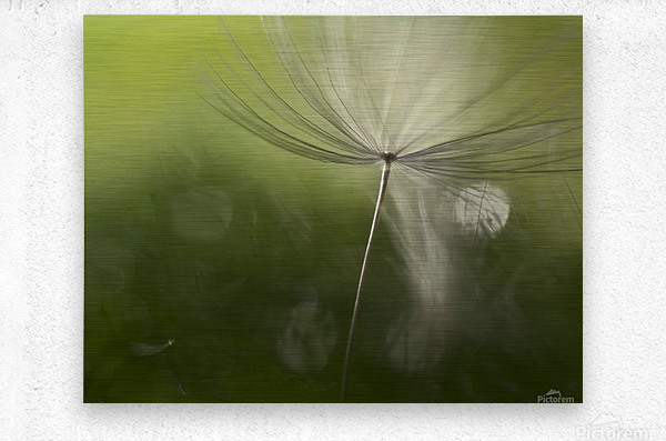 Shadows in the green  Metal print