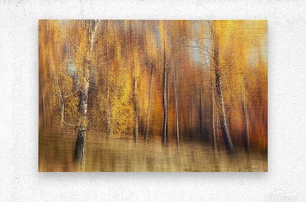 Autumn Birches  Metal print