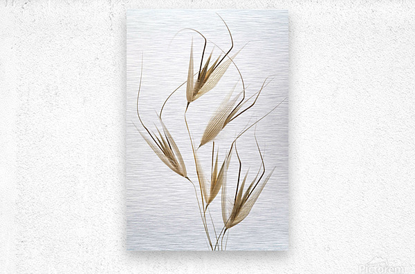 Delicacy of nature  Metal print