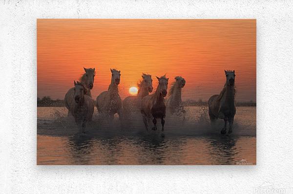 Sunset in Camargue  Metal print
