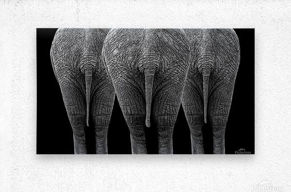 The Elephants  Metal print