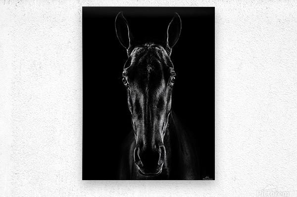 The Horse in Noir  Metal print