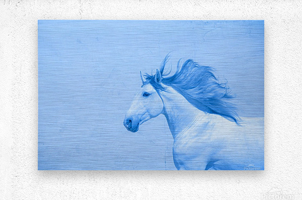 Blue Andalusian Horse 2  Metal print