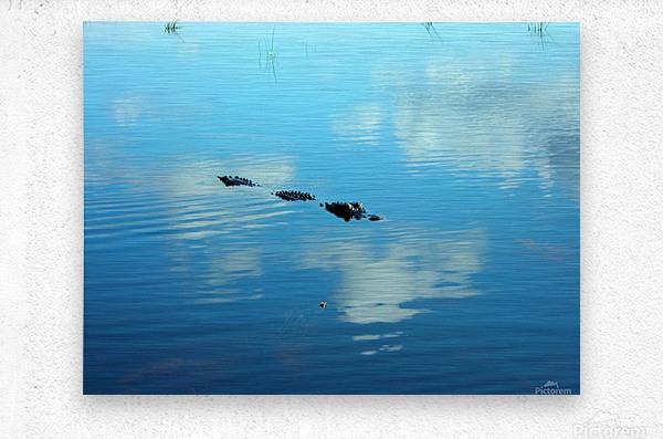 Everglades1  Metal print