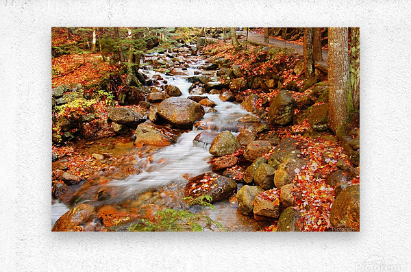 New England autumn stream  Metal print