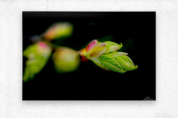Stepping out from the dark  Metal print