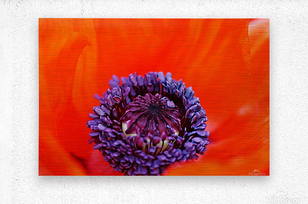 Poppy Whorl  Metal print