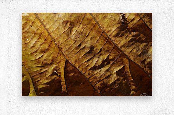 Close-up view of dried leaf  Metal print