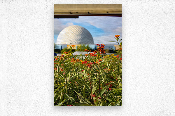 Food and Wine EPCOT  Metal print