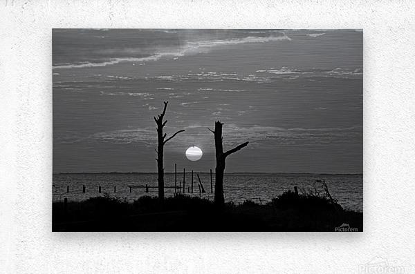BW Two Tree Sunset  Metal print