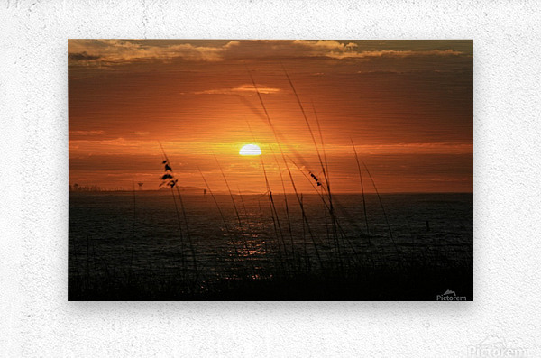 Sea Grass Sunset  Metal print