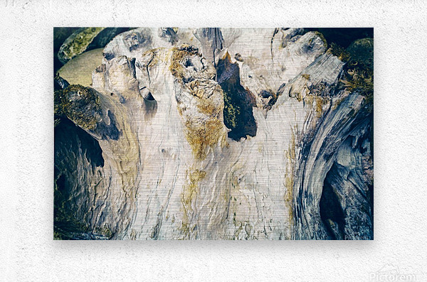 Life of Wood  Metal print