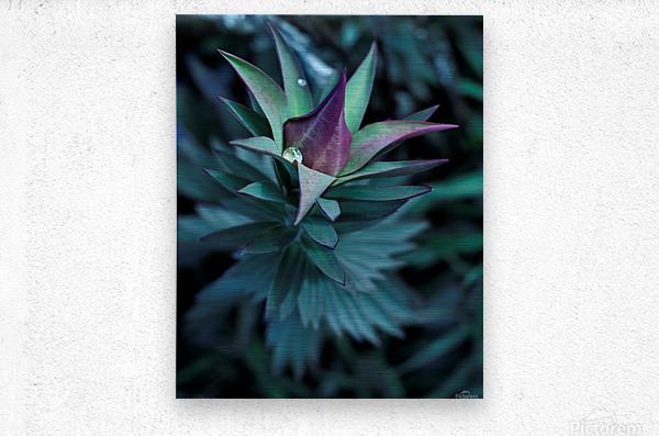 Funky flora  Metal print