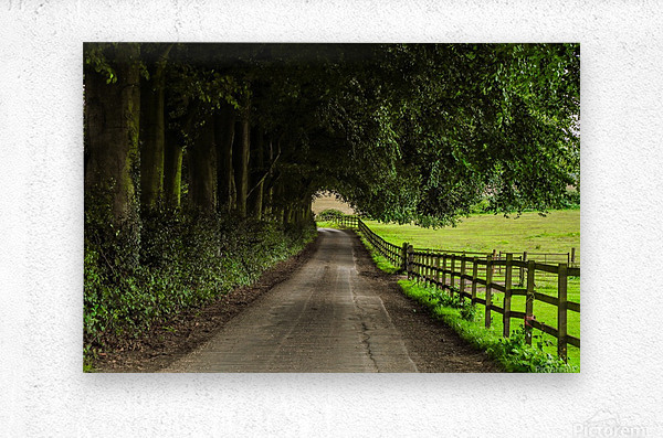 Beautiful Nature Landscape Tree Forest Trees Photography landscape photo Scenery  Impression metal