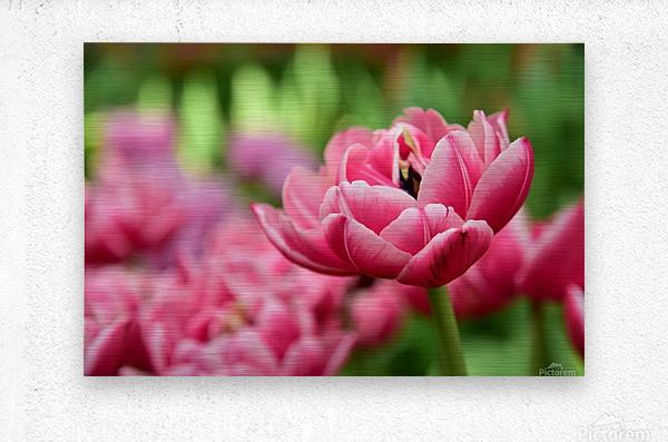 Plants - Flowers - 013  Metal print