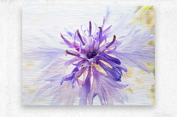 Purple Flower Burst  Metal print