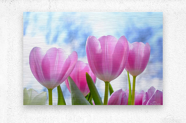 nature, tulip, flora, flower, summer, bright, petal, season, color, floral, growth, blooming, freshness,  Metal print