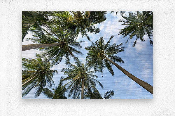 palm trees, sky, palms, background, summer, tropical, nature, holidays, travel, paradise, outdoors,  Metal print
