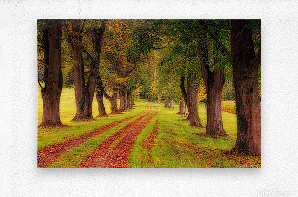 tree, avenue, nature, landscape, tree lined avenue, away, distance, trail, autumn, leaves, forest, green, mood, green leaves, lane, path,  Metal print