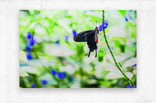 Black & Red Butterfly  Metal print