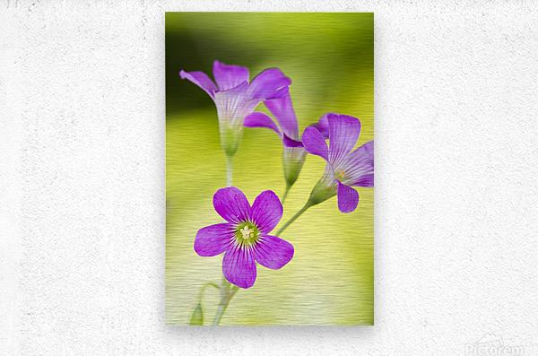 Little Pink Flowers  Metal print