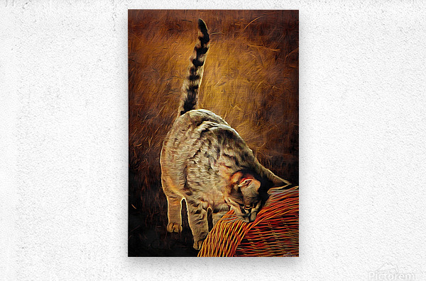 Curiosity And The Cat  Metal print