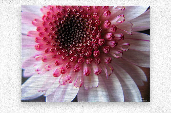 Floral Delicacy  Metal print