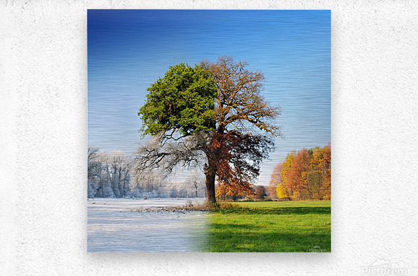 4 seasons  Metal print