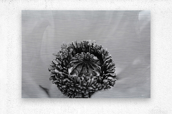 Poppy Whorl Black And White  Metal print