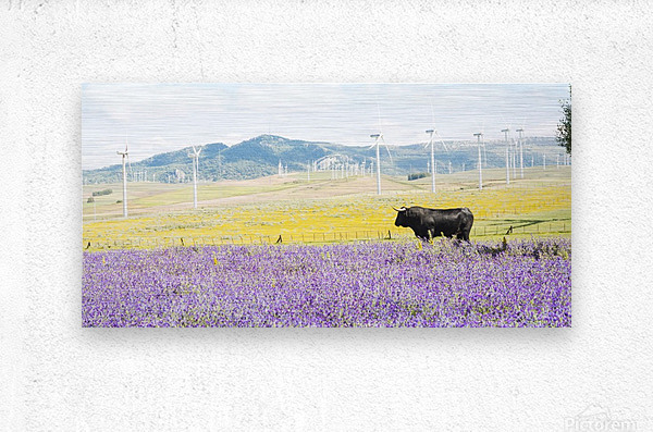 BULL AMONGST FLOWERS  Metal print