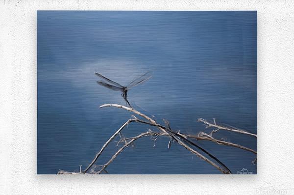 Dragonfly Digital Painting 52-70 200px  Metal print