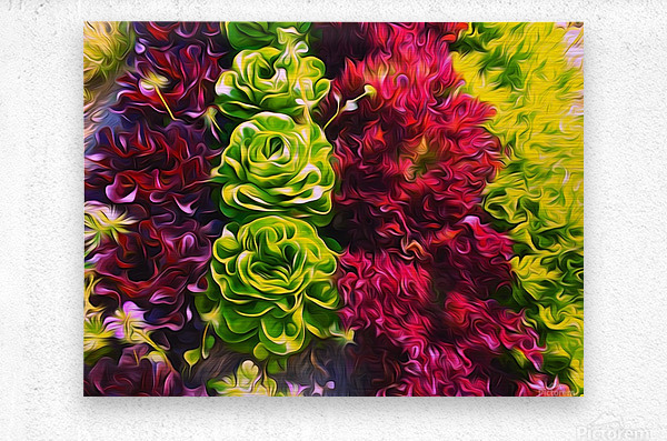 Lettuces  Metal print