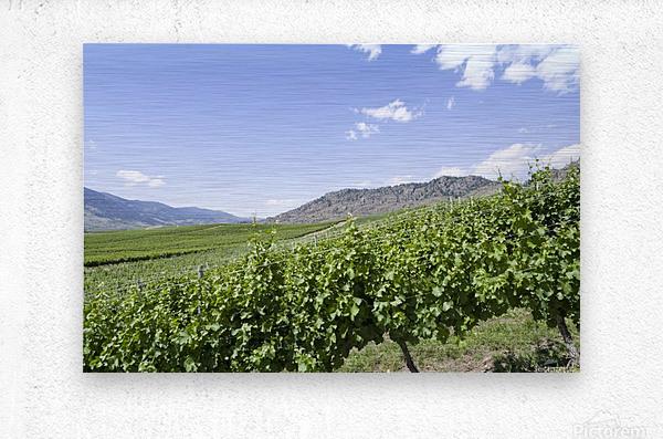 Okanagan Valley winery  Metal print