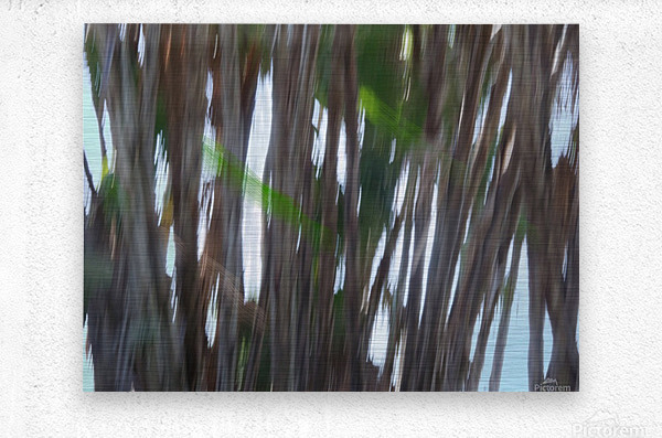Moving Trees 26 Landcape 52 70 200px  Metal print