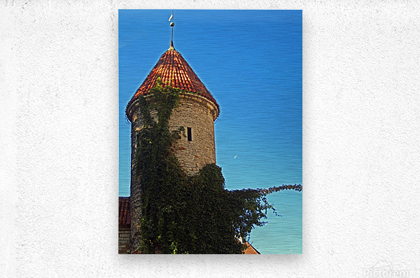 Vine Crawlers  Metal print