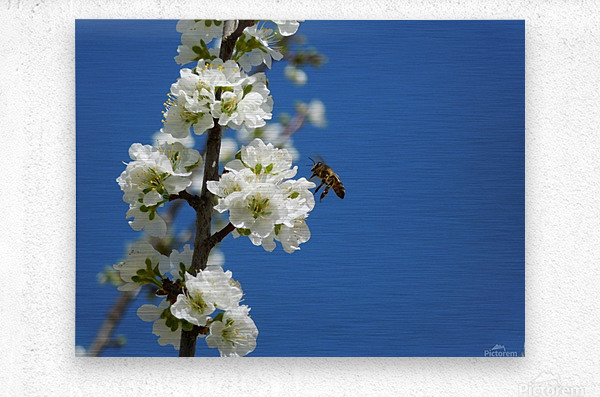 bee and flowers and blue sky  Metal print