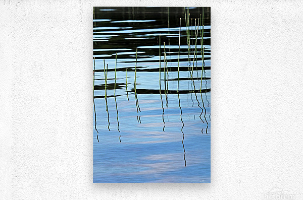 Reeds In The Shallows Abstract  Metal print