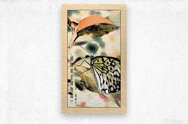 Papillon chinois   Metal print