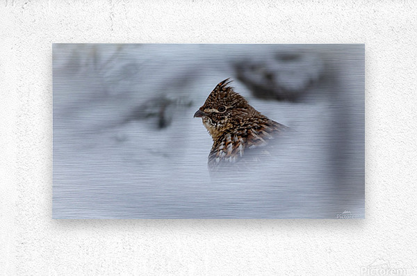 Winter Ruffed Grouse  Metal print