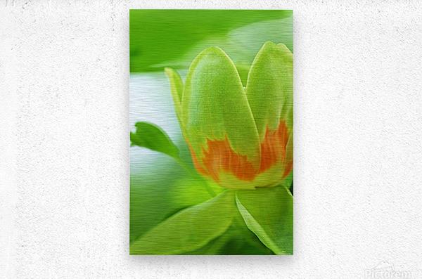 Yellow Poplar Flower  Metal print