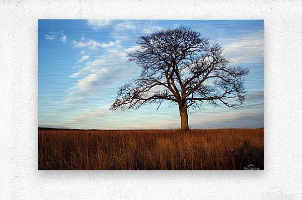 Shubenacadie Tree  Metal print