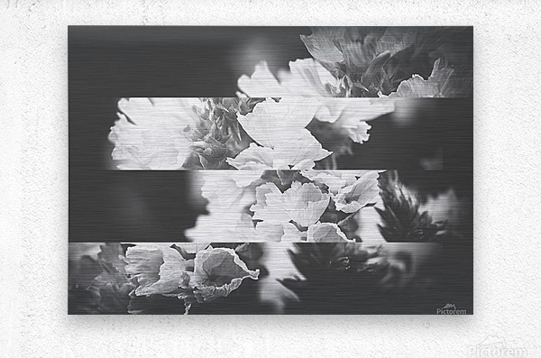 Flower Bells Collage BnW  Metal print