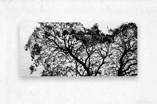 Tree Top  Metal print