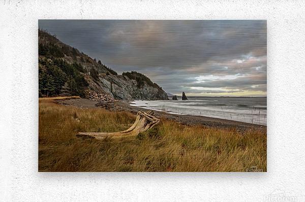 Acadian Driftwood  Metal print