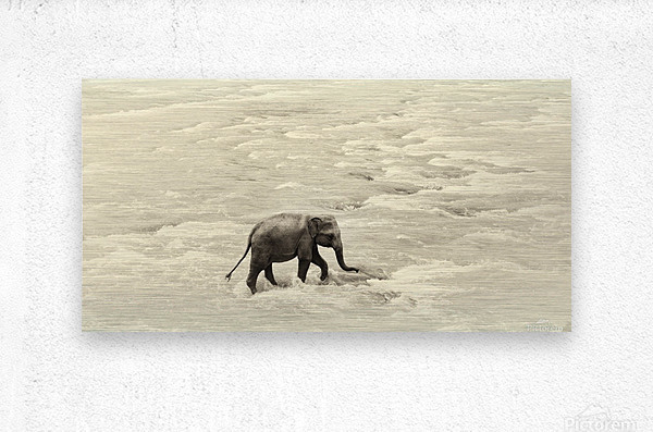RIVER ELEPHANTS 5.  Metal print