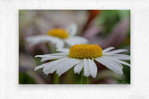White Flower Photograph  Metal print